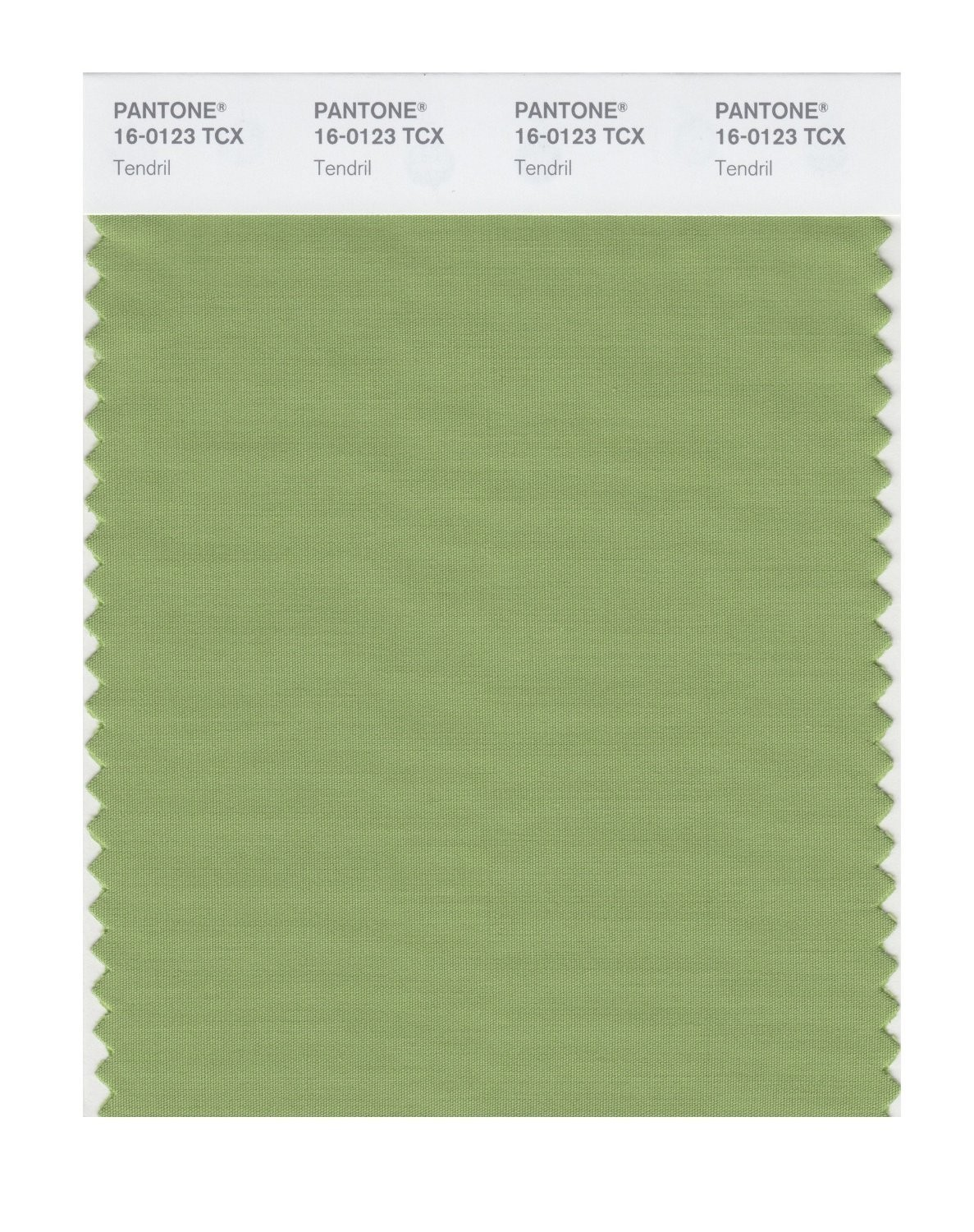Pantone 16-0123 TCX Swatch Card Tendril
