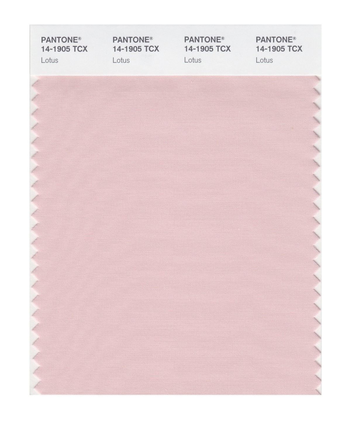 Pantone 14-1905 TCX Swatch Card Lotus