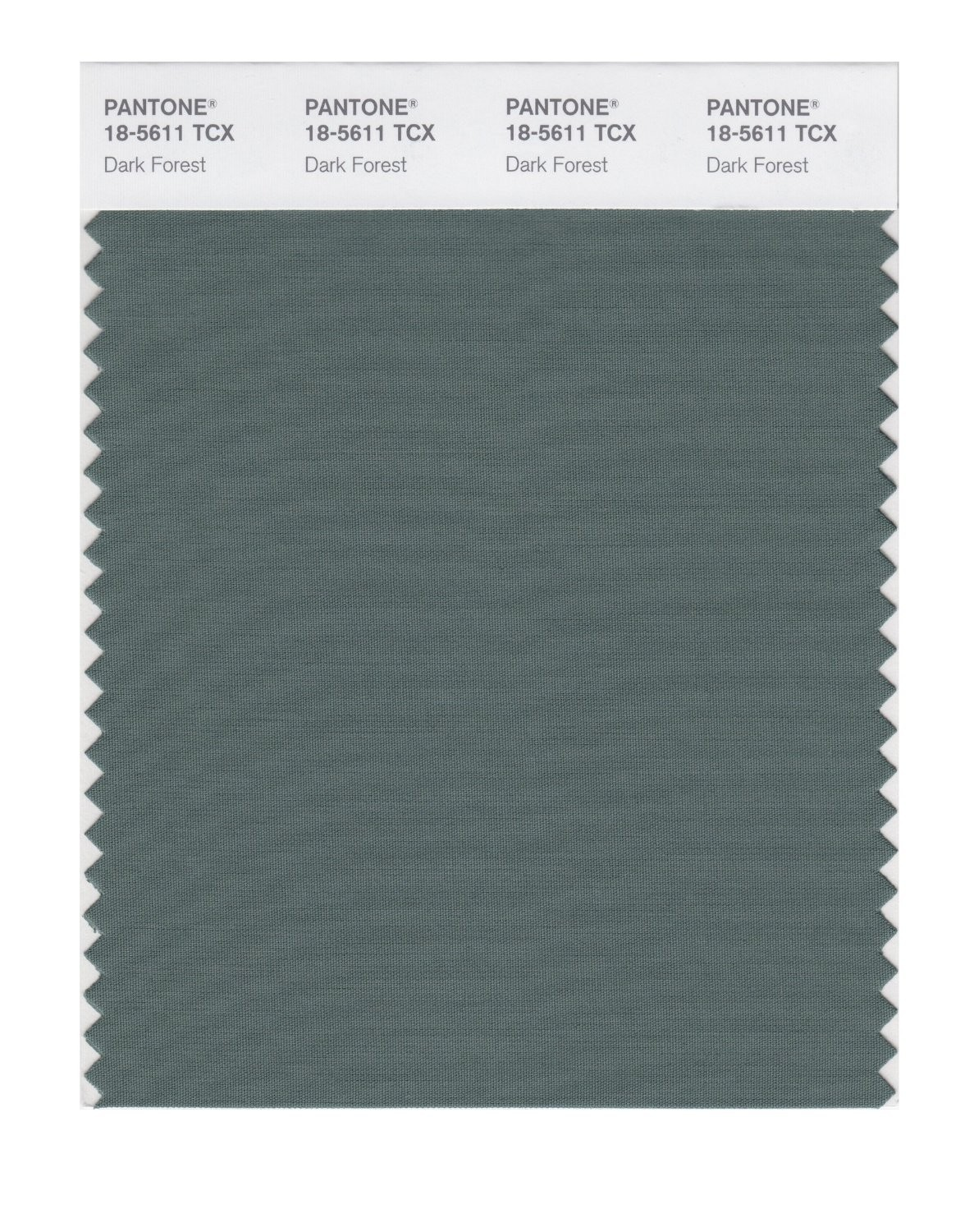 Pantone 18-5611 TCX Swatch Card Dark Forest