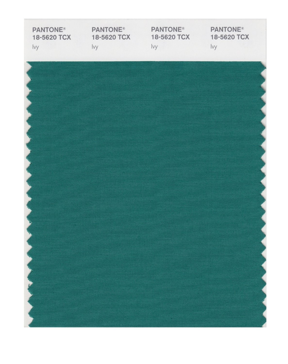 Pantone 18-5620 TCX Swatch Card Ivy