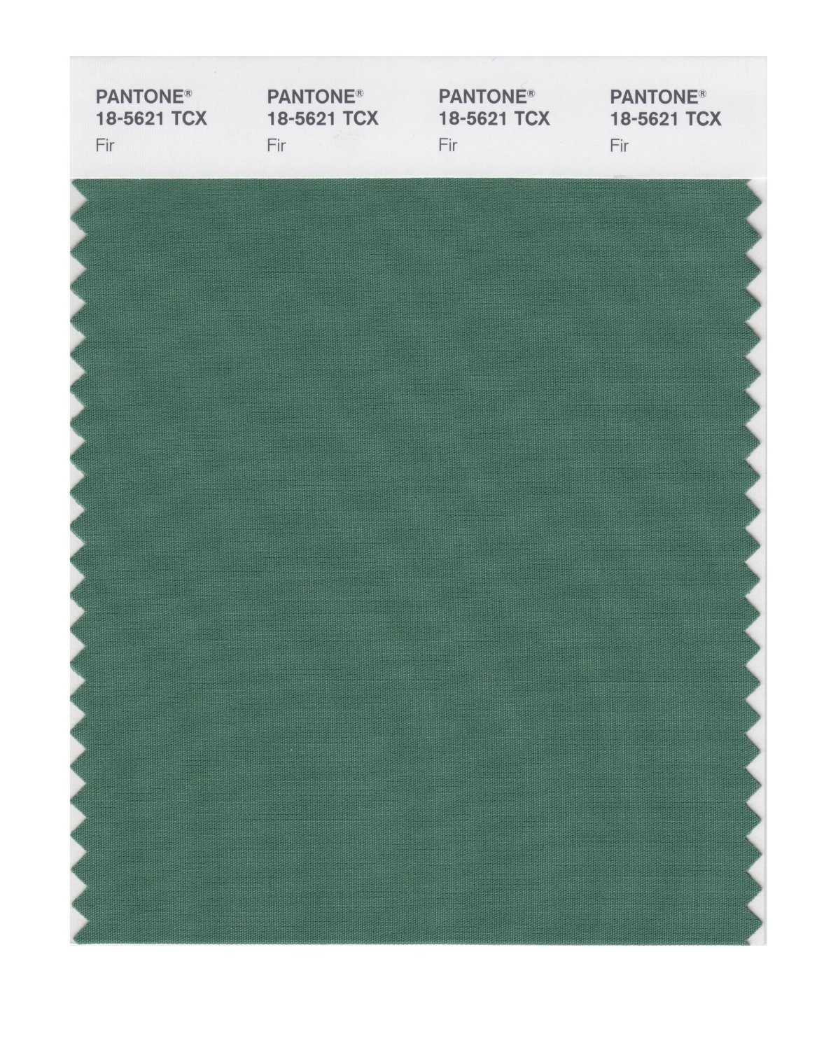 Pantone 18-5621 TCX Swatch Card Fir