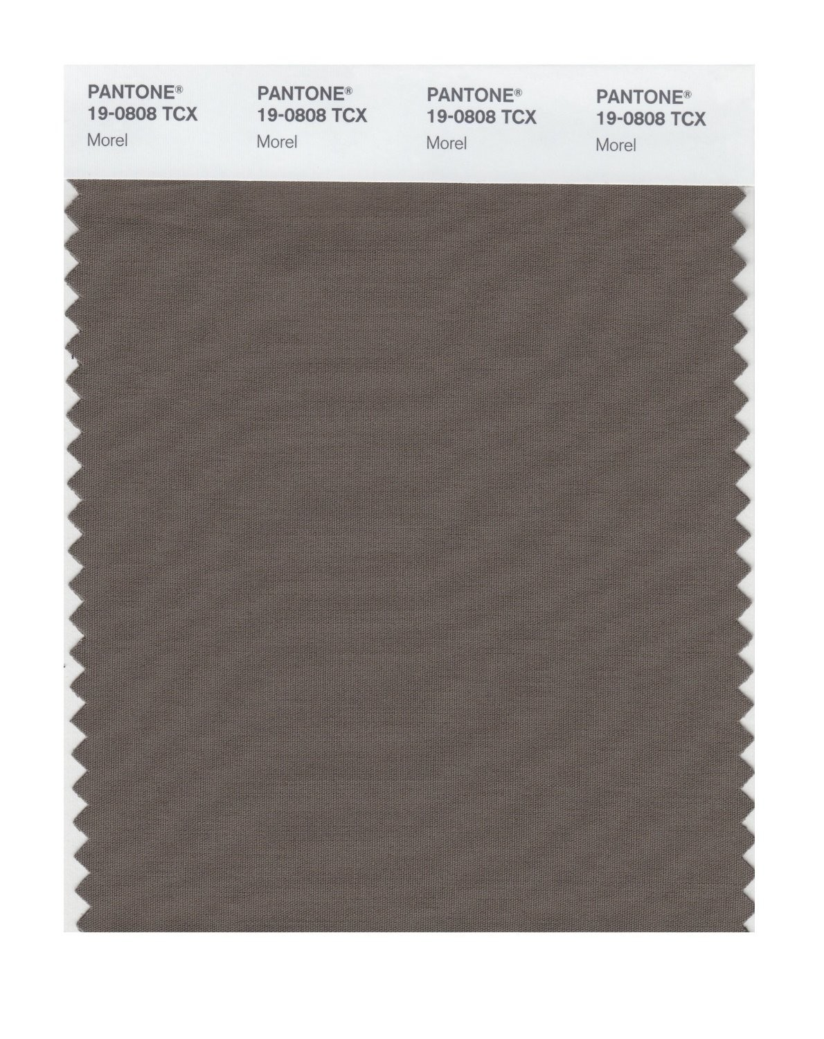 Pantone 19-0808 TCX Swatch Card Morel
