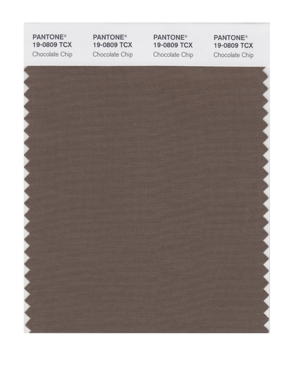 Pantone 19-0809 TCX Swatch Card Chocolate Chip