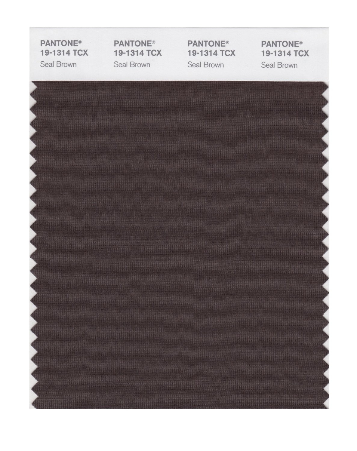 Pantone 19-1314 TCX Swatch Card Seal Brown