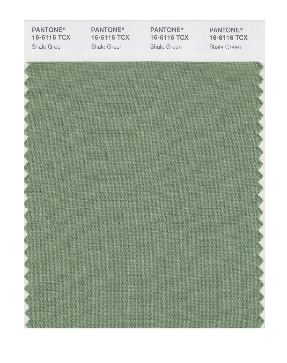 Pantone 16-6116 TCX Swatch Card Shale Green