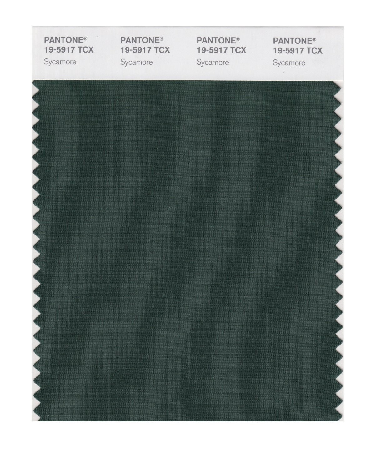 Pantone 19-5917 TCX Swatch Card Sycamore